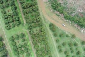 aerial survey over orchard